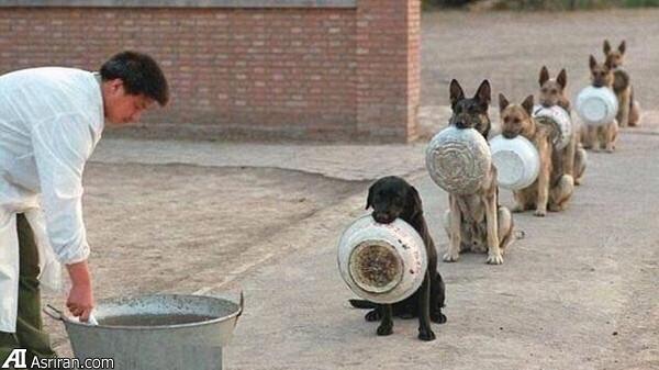 سگ غذا